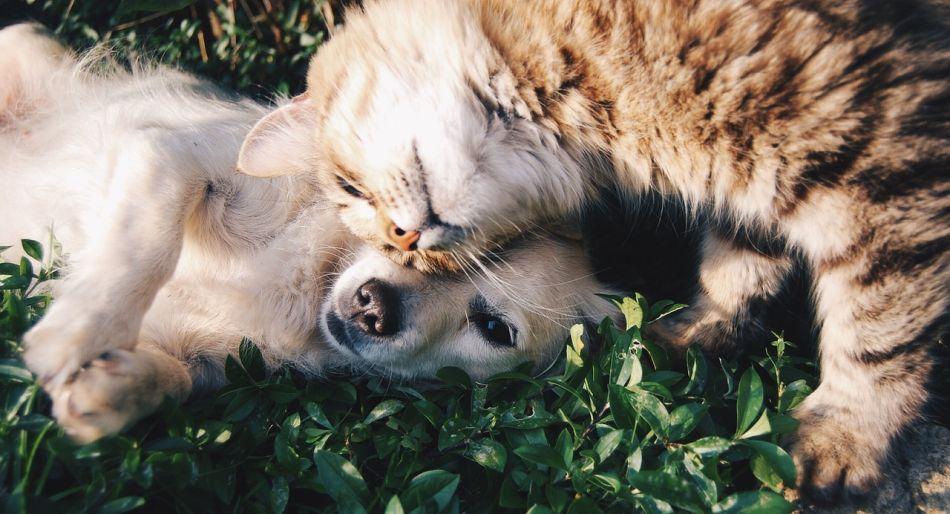 Hablemos de Mascotas